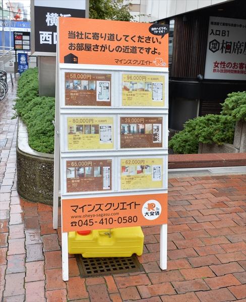 D4A_0492gato__article