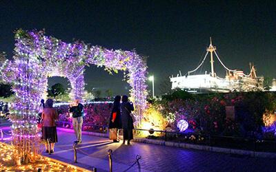 【人気記事】バラとイルミの共演!山下公園スノーローズガーデン