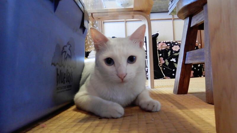 にゃんにゃんにゃんの猫の日は看板猫に癒されよう!