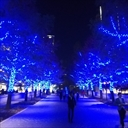 【ヨコハマミライト】横浜・みなとみらい イルミネーションの道を実際に歩いてきた