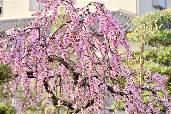 「七つの文様を奏でる庭 ~FLOWER GARDEN 2020~」