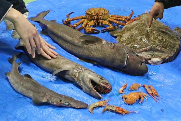 深海生物まつり
